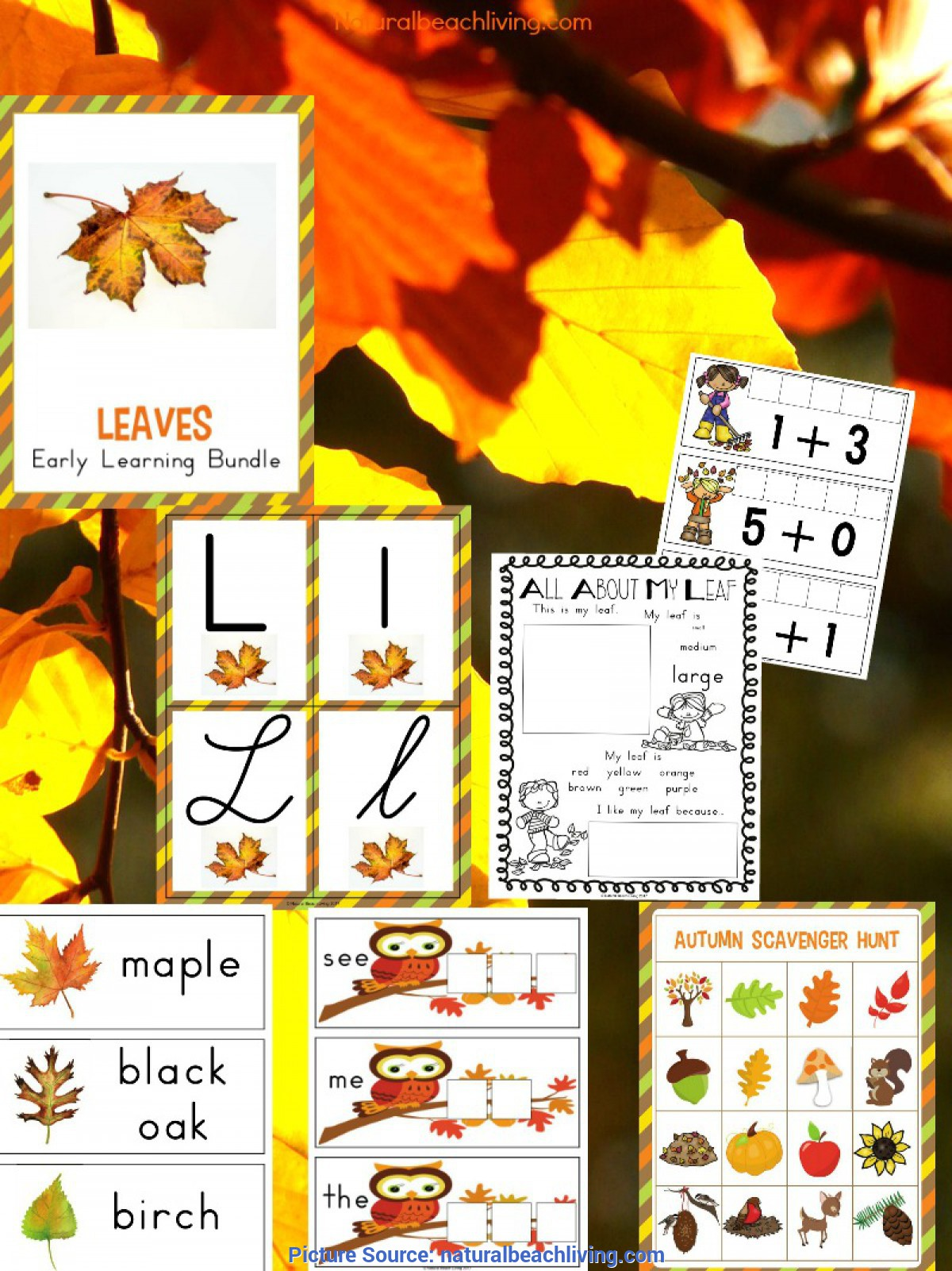 Complex Fall Themed Lesson Plans For Preschool Kindergarten And Preschool Leaf Theme Lesson Plan - Natural Beac