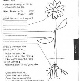 Best Third Grade Science Activities 1St Grade Science Worksheets | Picking Apart Plants - Peopl