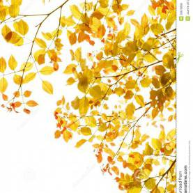 Briliant Autumn Leaves Theme Autumn Leaves Foliage Border Stock Photo - Image Of Intricat