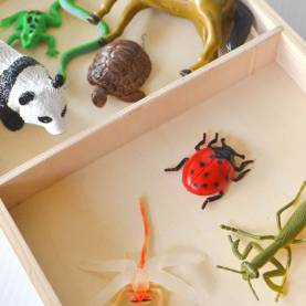 Complex Lesson Plan For Preschool Bugs Bug Or Not? Simple Sorting Tray For Learning About Insect