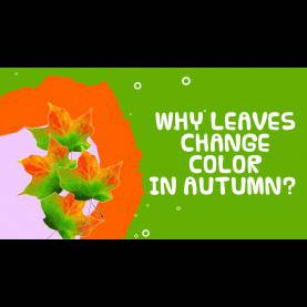 Complex Why do Leaves Change Color For Preschool Why do Leaves Change Color In Autumn/fall? - Facts About Autum