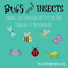 Excellent Bug Lesson Plans For Preschool Bugs & Insects Theme - Teaching