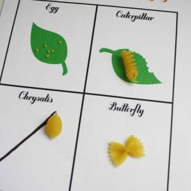 Excellent Kindergarten Lesson Plan Butterfly Life Cycle Science: Life Cycle Of A Butterfly For A Lesson Plan, The Teache