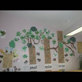 Excellent Trees Unit Creative Curriculum Trees Trees Trees - Brockton Day Nur