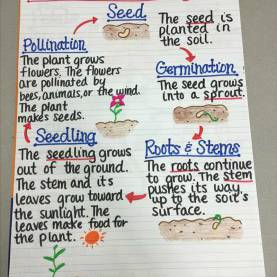 Fresh 3Rd Grade Science Lesson Plans Plant Life Cycle 13 Creative Ways To Teach Plant Life Cycle - Weareteac