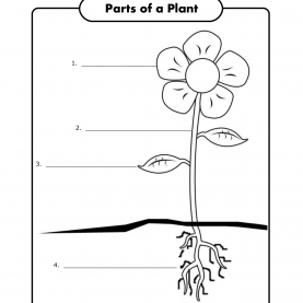 Good 1St Grade Science Activities Children Can Label The Parts Of A Plant, From Super Teache