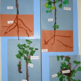Interesting Tree Study Activities For Preschoolers 56 Best Creative Curriculum- Tree Study Ideas Images On Pinteres