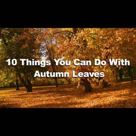 Newest Activities To do With Autumn Leaves 10 Things You Can do With Autumn Leaves - Imagine Fo