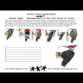 Newest Pre K Lesson Plans Birds Woodpecker Lesson Plans - Google Search | Wnc Preschool Natur