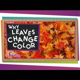 Regular Why do Leaves Change Color In The Fall For Kindergarten Why do Leaves Change Colors In The Fall? - You