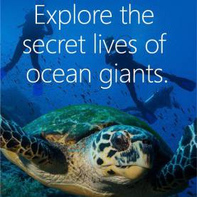 Special Lesson Plans For Marine Science 144 Best Lesson Plans Images On Pinterest | Lesson Plannin