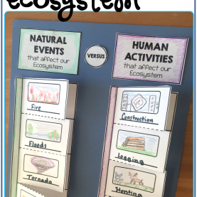 Top Ecosystem Lesson Plans 3Rd Grade Free Resource - Foldable Activity That Highlights The Changes I