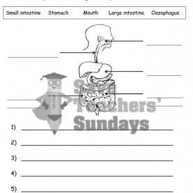 Trending Lesson Plan In Science 4 Digestive System 20 Best Year 4 Animals, Including Humans Lesson Plans, Worksheet