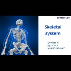 Typical Science Lessons For Class 6 Skeletol System Cbse Science Lesson Class 6Th - You