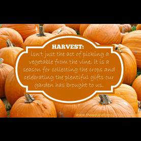 Unusual Harvest Theme For Preschool Harvest Preschool Activities: A Social Studies Le