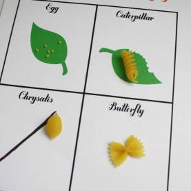Unusual Lesson Plans For Natural Science Grade 6 Science: Life Cycle Of A Butterfly For A Lesson Plan, The Teache