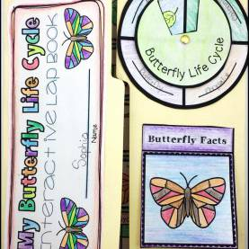 Useful 5E Lesson Plan Life Cycle Butterfly Life Cycle Of A Butterfly | Hungry Caterpillar, Activities An