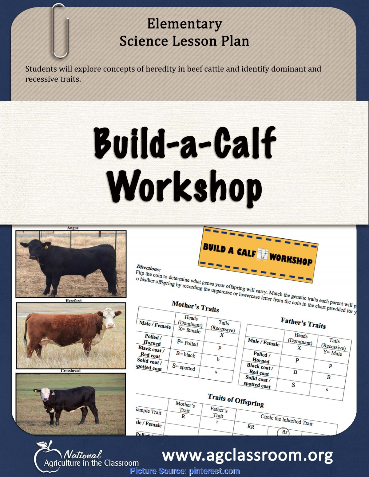 Useful Lesson Plan For Agricultural Science Lesson Plan And Activity Sheet For Students To Discover Traits O