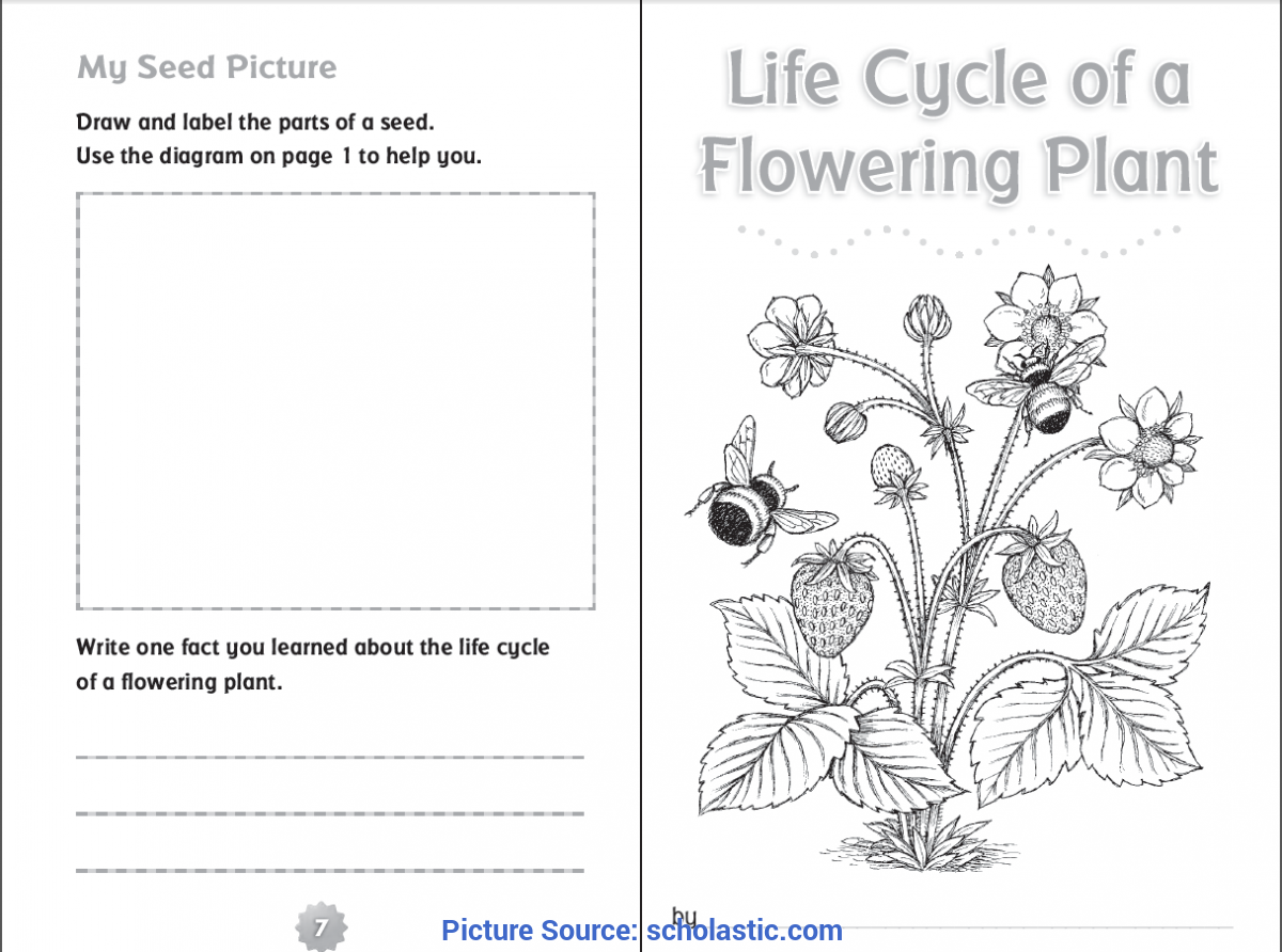 Valuable Life Cycle Lesson Plans For 2Nd Grade 10 Ready-To-Go Resources For Teaching Life Cycles | Schola