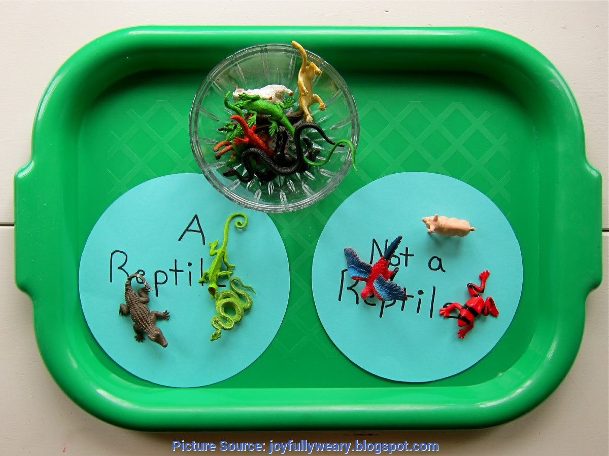 Regular Preschool Lesson Plans Reptiles Preschool Syllabus: Rept