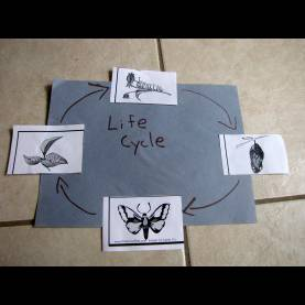 Briliant Lesson Plans For Preschool Butterflies Preschool Lesson Plan: Life Cycle Of A Butterfly €? Nurture