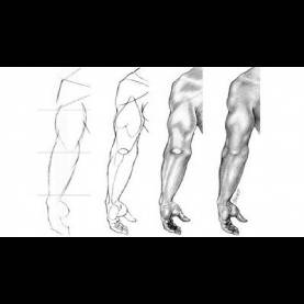 Excellent Pencil Drawing Lessons Figure Drawing Lessons 7/8 - Drawing And Shading - Shadin