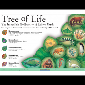 Good Lesson Plan Science Biodiversity Science Biodiversity Grade 6 - Lessons - Tes T