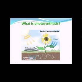 Special 7Th Class Science Lessons What Is Photosynthesis - Nutrition In Plants Science Cbse Clas