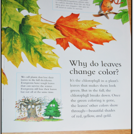 Top Why do Leaves Change Color Book Activities Why do Leaves Change Color Printable Book | Coloring
