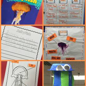 Useful Preschool Lesson Plan Jellyfish Ocean Animals Research And Writing! | Smedley'S Smorgasboard O