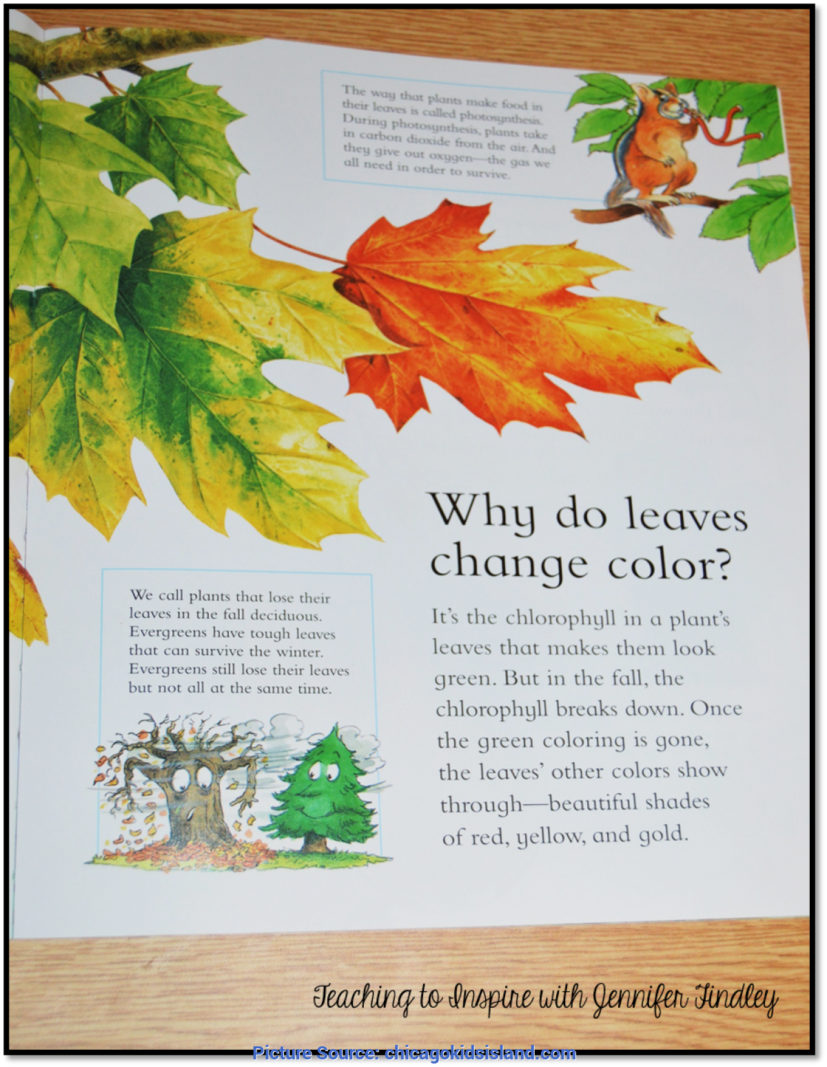 Top Why do Leaves Change Color Book Activities Why do Leaves Change Color Printable Book   Coloring