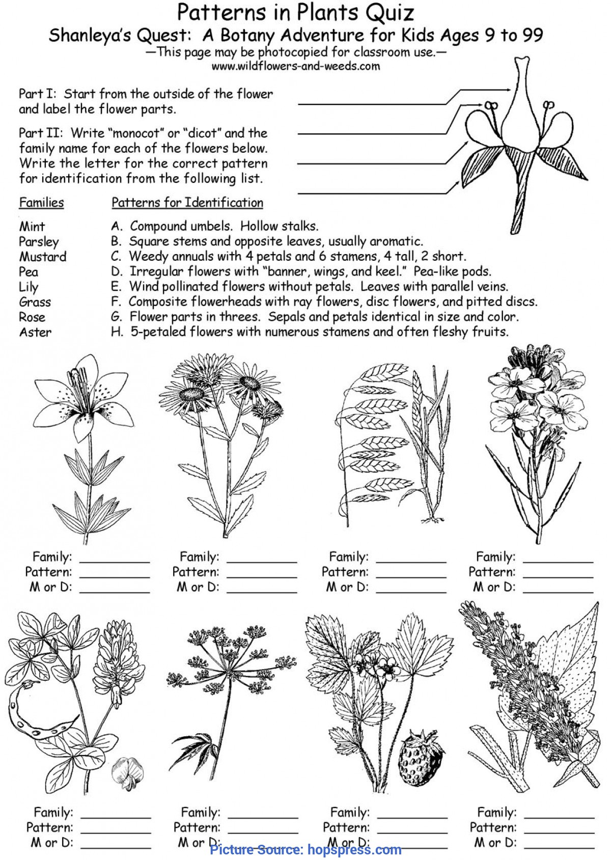 Trending Sample Detailed Lesson Plan In Biology Lesson Plans: Science: Biology: Botany: Patterns In Plants Wit