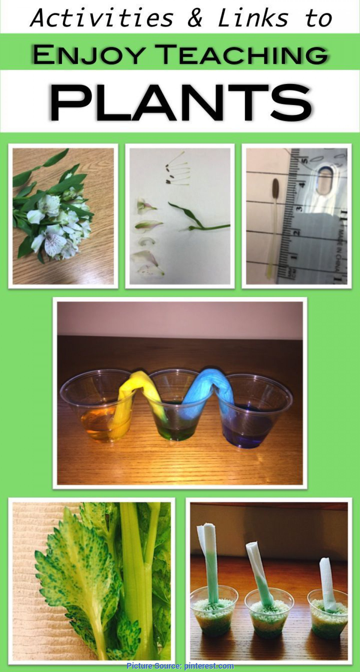 Useful Lesson Plan For Preschool On Plants Enjoy Teaching Plants With These Hands-On Activities, Video Link